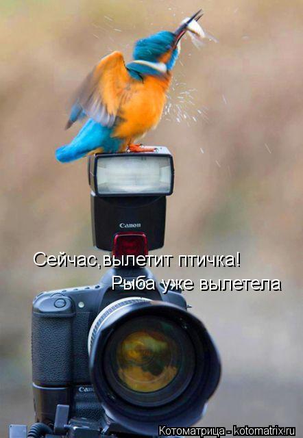 Котоматрица: Сейчас,вылетит птичка!  Рыба уже вылетела