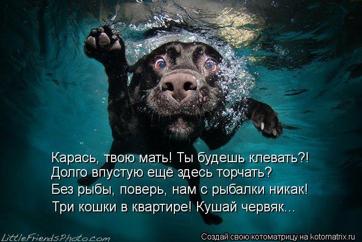 Котоматрица: Карась, твою мать! Ты будешь клевать?! Без рыбы, поверь, нам с рыбалки никак! Три кошки в квартире! Кушай червяк... Долго впустую ещё здесь торч