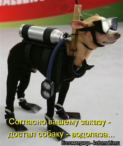 Котоматрица: Согласно вашему заказу -  достал собаку - водолаза...