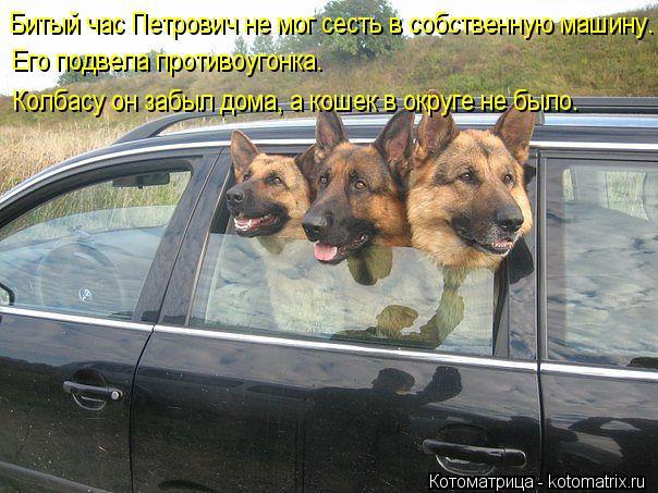 Котоматрица: Битый час Петрович не мог сесть в собственную машину. Его подвела противоугонка. Колбасу он забыл дома, а кошек в округе не было.
