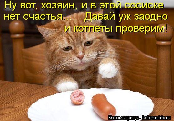 Котоматрица: Ну вот, хозяин, и в этой сосиске  нет счастья...    Давай уж заодно  и котлеты проверим!