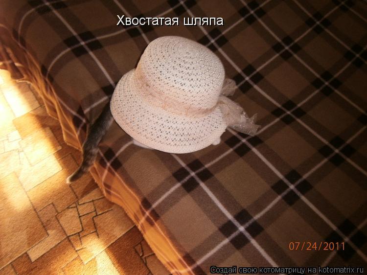 Котоматрица: Хвостатая шляпа
