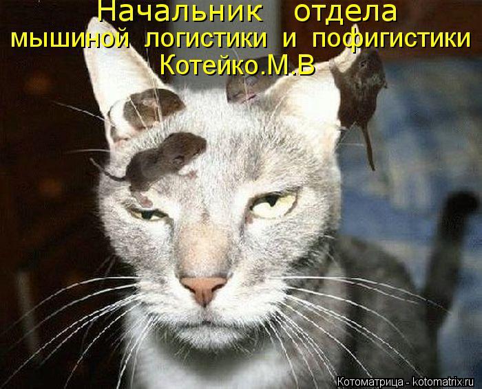 Котоматрица: Начальник   отдела   мышиной  логистики  и  пофигистики Котейко.М.В