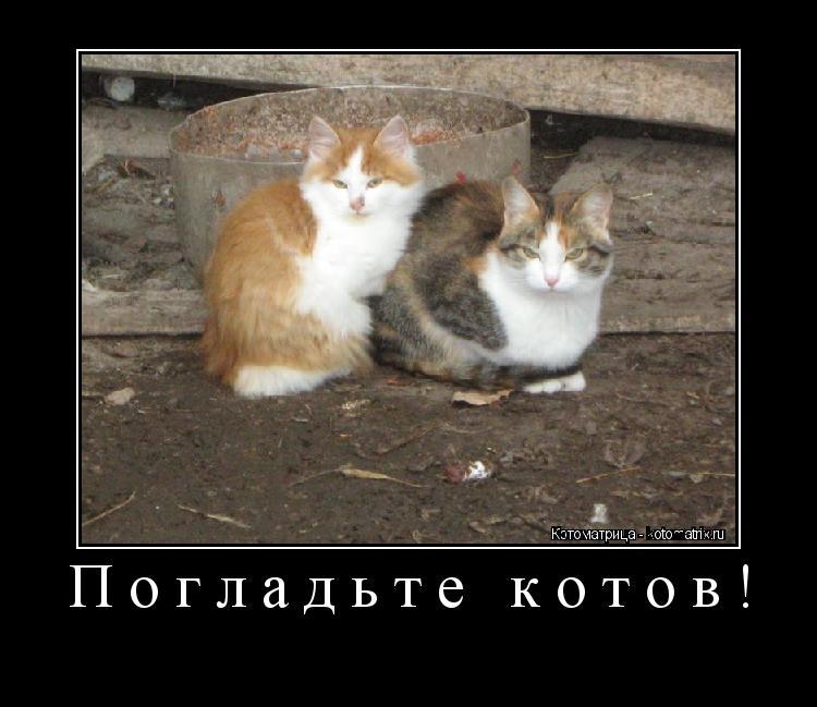 Котоматрица: Погладьте котов!