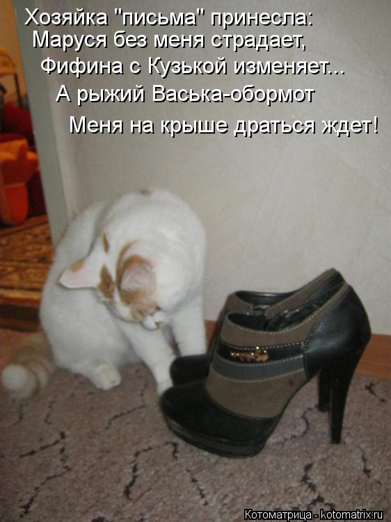 """Котоматрица: Хозяйка """"письма"""" принесла: Маруся без меня страдает, Фифина с Кузькой изменяет... А рыжий Васька-обормот Меня на крыше драться ждет!"""