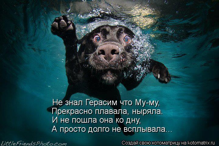 Котоматрица: Не знал Герасим что Му-му, Прекрасно плавала, ныряла. И не пошла она ко дну, А просто долго не всплывала...