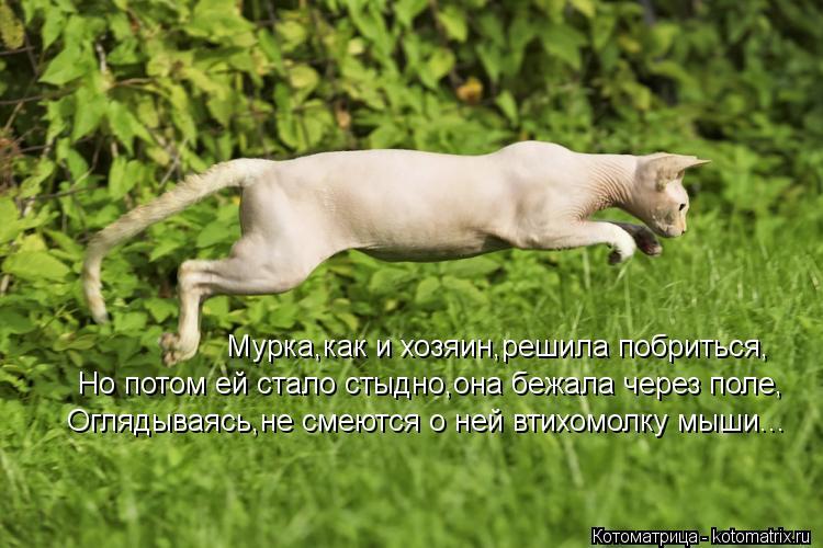 Котоматрица: Мурка,как и хозяин,решила побриться, Но потом ей стало стыдно,она бежала через поле, Оглядываясь,не смеются о ней втихомолку мыши...