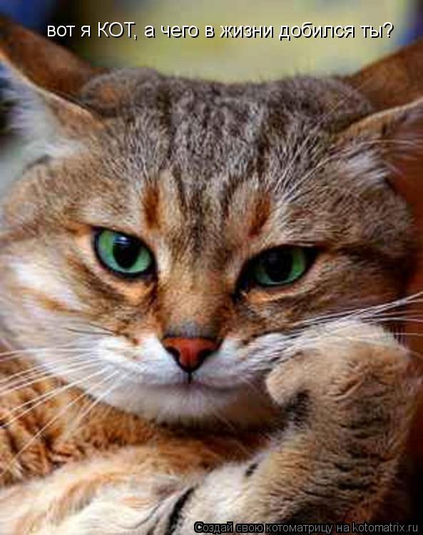Вот я кот а ты чего добился в этой жизни