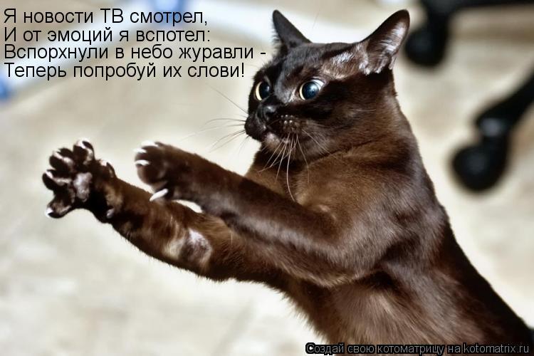 Котоматрица: Я новости ТВ смотрел, И от эмоций я вспотел: Вспорхнули в небо журавли - Теперь попробуй их слови!