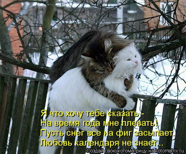 Котоматрица: Я что хочу тебе сказать -  На время года мне плевать! Пусть снег все на фиг засыпает. Любовь календаря не знает...