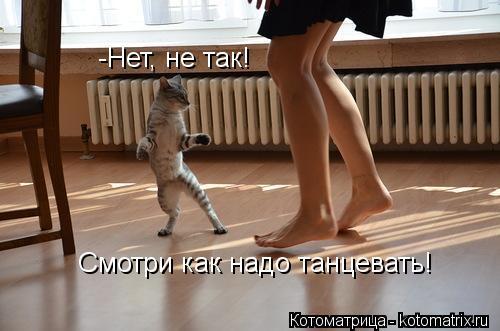 Котоматрица: -Нет, не так! Смотри как надо танцевать!