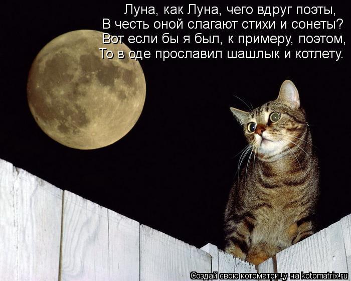 Котоматрица: Луна, как Луна, чего вдруг поэты, В честь оной слагают стихи и сонеты? Вот если бы я был, к примеру, поэтом, То в оде прославил шашлык и котлету.