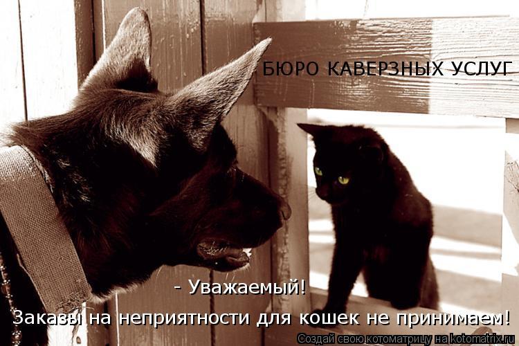 Котоматрица: БЮРО КАВЕРЗНЫХ УСЛУГ Заказы на неприятности для кошек не принимаем! - Уважаемый!