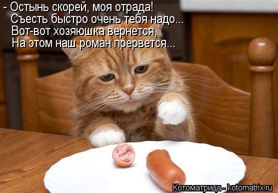 Котоматрица: - Остынь скорей, моя отрада! Съесть быстро очень тебя надо... Вот-вот хозяюшка вернется, На этом наш роман прервется...