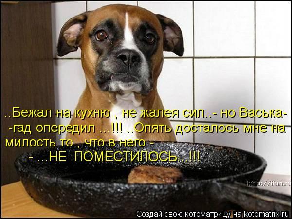 Котоматрица: ..Бежал на кухню , не жалея сил..- но Васька- -гад опередил ...!!! ..Опять досталось мне на  милость то , что в него -  - ...НЕ  ПОМЕСТИЛОСЬ...!!!