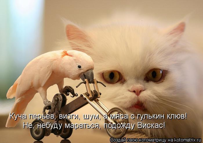 Котоматрица: Куча перьев, визги, шум, а мяса с гулькин клюв!  Не, небуду мараться, подожду Вискас!