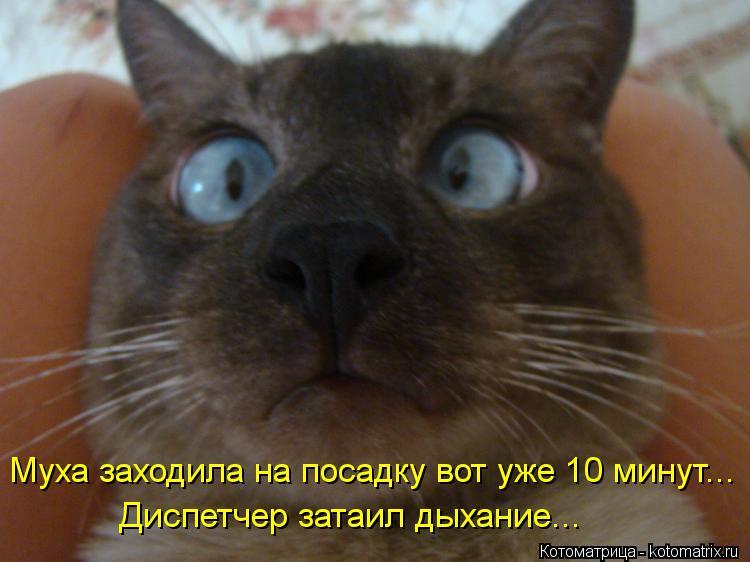 kotomatritsa_GC.jpg