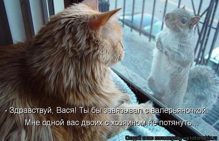 Котоматрица: - Здравствуй, Вася! Ты бы завязывал с валерьяночкой. Мне одной вас двоих с хозяином не потянуть...