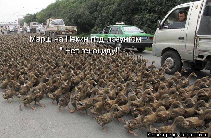 "Котоматрица: Марш на Пекин под лозунгом  "" Нет геноциду!"""