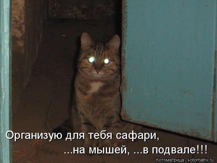 Котоматрица: Организую для тебя сафари,  ...на мышей, ...в подвале!!!
