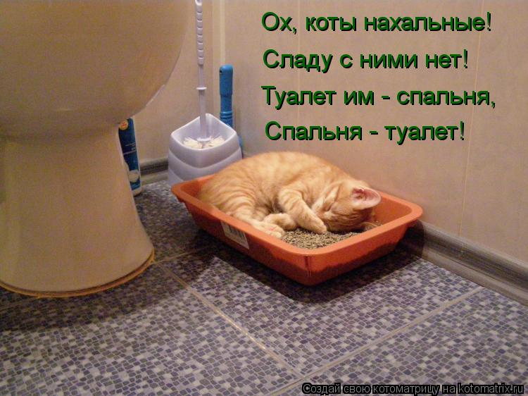 Котоматрица: Ох, коты нахальные! Сладу с ними нет! Туалет им - спальня, Спальня - туалет!