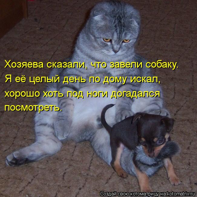 Котоматрица: Хозяева сказали, что завели собаку. Я её целый день по дому искал,  хорошо хоть под ноги догадался  посмотреть.