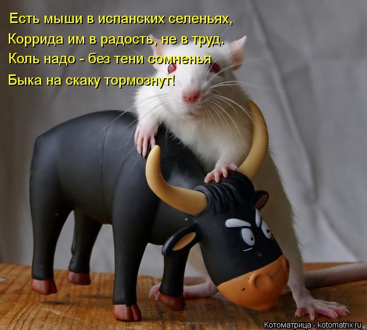Котоматрица: Есть мыши в испанских селеньях, Коррида им в радость, не в труд. Коль надо - без тени сомненья Быка на скаку тормознут!