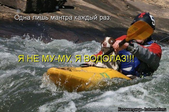 Котоматрица: Одна лишь мантра каждый раз: Я НЕ МУ-МУ, Я ВОДОЛАЗ!!!