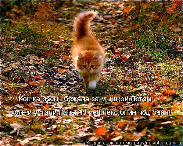 Котоматрица: Кошка осень бежала за мышкой Летом, хоть и устали лапы,но рефлекс,блин,подгонял!