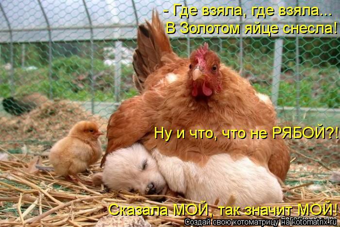 Котоматрица: - Где взяла, где взяла... В Золотом яйце снесла! Ну и что, что не РЯБОЙ?! Сказала МОЙ, так значит МОЙ!