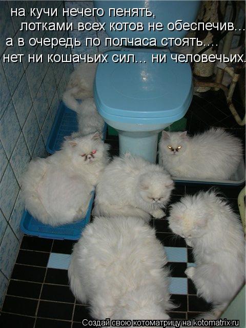 Котоматрица: на кучи нечего пенять,  лотками всех котов не обеспечив.... а в очередь по полчаса стоять.... нет ни кошачьих сил... ни человечьих...