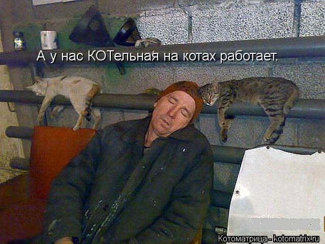 Котоматрица: А у нас КОТельная на котах работает.