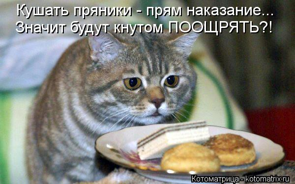 Котоматрица: Кушать пряники - прям наказание... Значит будут кнутом ПООЩРЯТЬ?!