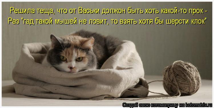 """Котоматрица: Решила теща, что от Васьки должон быть хоть какой-то прок - Раз """"гад такой мышей не ловит, то взять хотя бы шерсти клок"""""""