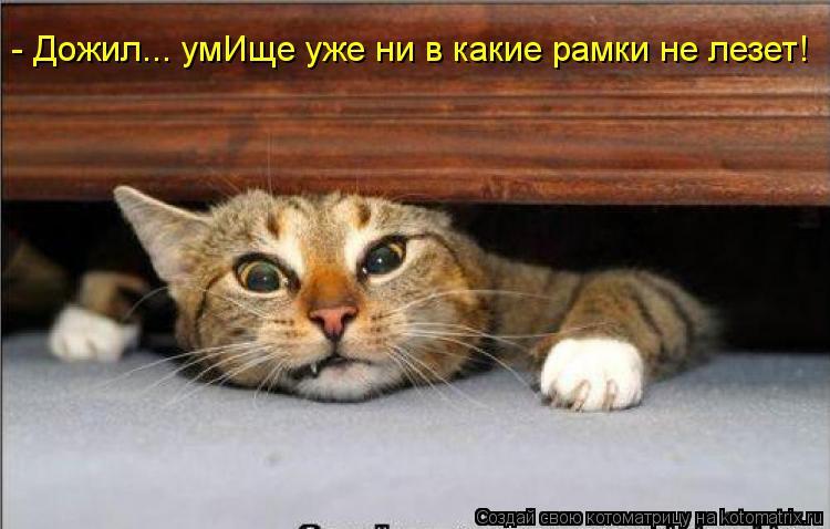 Котоматрица: - Дожил... умИще уже ни в какие рамки не лезет!