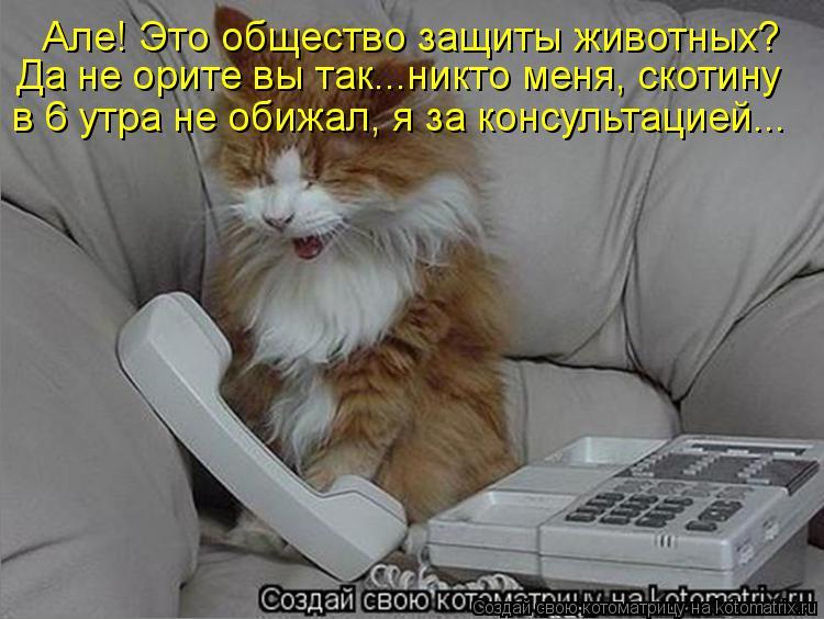 Котоматрица: Але! Это общество защиты животных? Да не орите вы так...никто меня, скотину в 6 утра не обижал, я за консультацией...