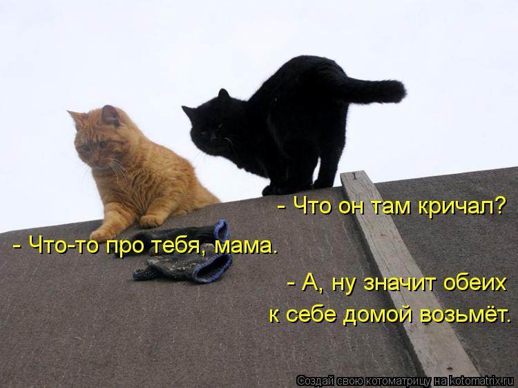 Котоматрица: - Что он там кричал?  - Что-то про тебя, мама.  - А, ну значит обеих к себе домой возьмёт.