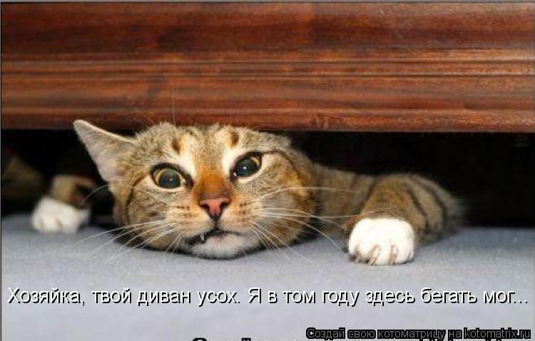Котоматрица: Хозяйка, твой диван усох. Я в том году здесь бегать мог...