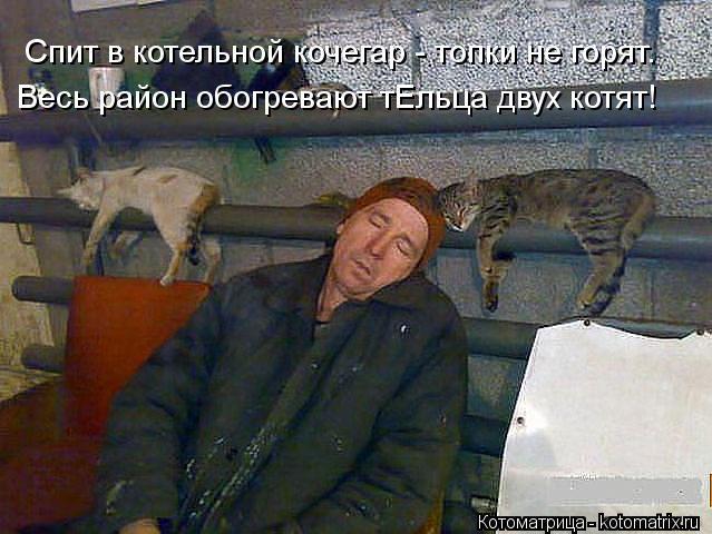 Котоматрица: Спит в котельной кочегар - топки не горят. Весь район обогревают тЕльца двух котят!