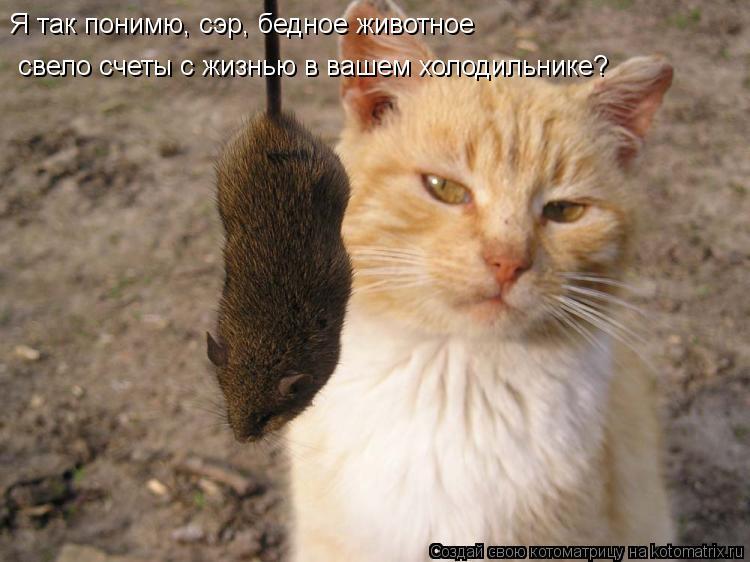 Котоматрица: Я так понимю, сэр, бедное животное свело счеты с жизнью в вашем холодильнике?