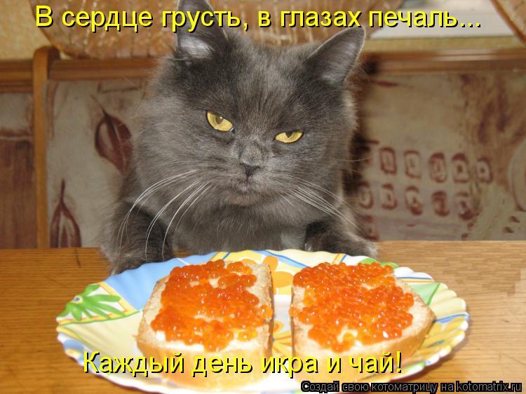 Котоматрица: В сердце грусть, в глазах печаль...  Каждый день икра и чай!