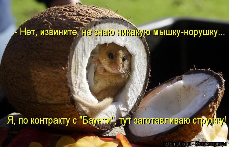 """Котоматрица: - Нет, извините, не знаю никакую мышку-норушку... Я, по контракту с """"Баунти"""", тут заготавливаю стружку!"""