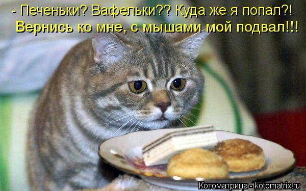 Котоматрица: - Печеньки? Вафельки?? Куда же я попал?! Вернись ко мне, с мышами мой подвал!!!