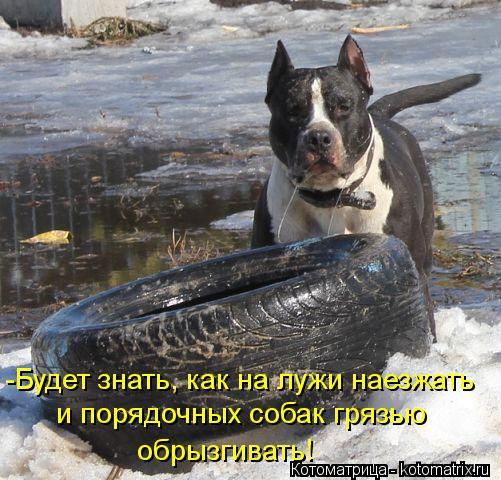 Котоматрица: и порядочных собак грязью обрызгивать! -Будет знать, как на лужи наезжать