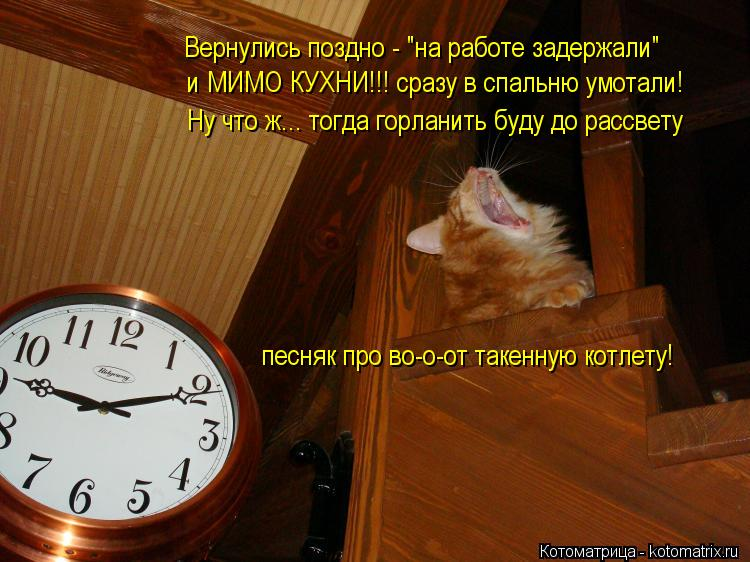 """Котоматрица: Вернулись поздно - """"на работе задержали"""" и МИМО КУХНИ!!! сразу в спальню умотали! Ну что ж... тогда горланить буду до рассвету песняк про во-о-от"""