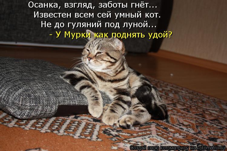 Котоматрица: Известен всем сей умный кот. Осанка, взгляд, заботы гнёт... Не до гуляний под луной... - У Мурки как поднять удой?