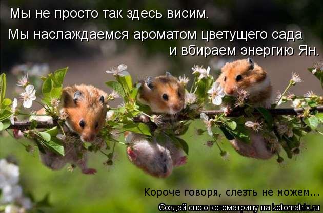 Котоматрица: Мы не просто так здесь висим. Мы наслаждаемся ароматом цветущего сада и вбираем энергию Ян. Короче говоря, слезть не можем...