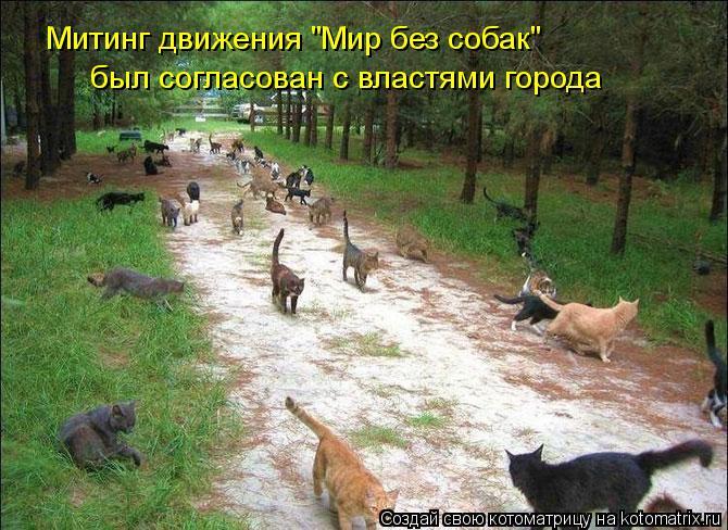 """Котоматрица: Митинг движения """"Мир без собак"""" был согласован с властями города"""