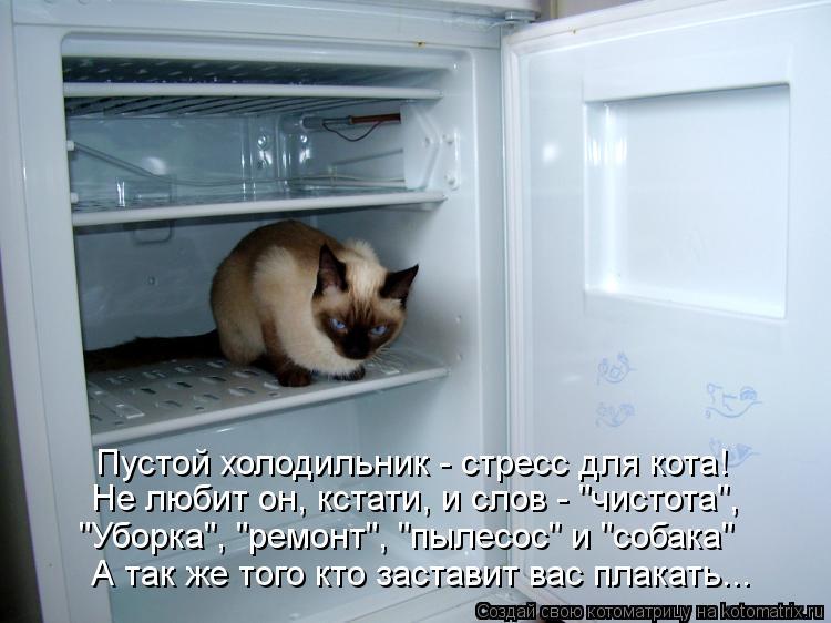 """Котоматрица: Пустой холодильник - стресс для кота! Не любит он, кстати, и слов - """"чистота"""", """"Уборка"""", """"ремонт"""", """"пылесос"""" и """"собака"""" А так же того кто заставит ва"""