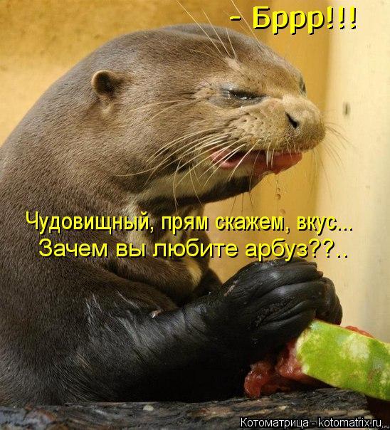 Котоматрица: Чудовищный, прям скажем, вкус... - Бррр!!! - Бррр!!! Зачем вы любите арбуз??..